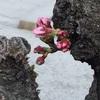 流れにのる✨自然と流れる。桜が教えてくれた緩やかな変容
