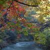 山中温泉「鶴仙渓遊歩道」紅葉