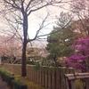 京都 大覚寺~嵐山 その2