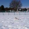 はじめての雪遊び