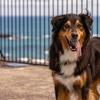 犬と関係ない腫瘍の話の続き