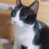 ★613鐘目『心眼で書かれた愛猫レフくんが書かれた究極のTシャツ手に入れたでしょうの巻』【エムPのイケてる大人計画】