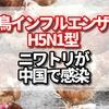 鳥インフルエンザ H5N1型中国のどこで発生?予防は?