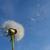 【雑談】季節の変わり目はなぜ風が強くなるのか
