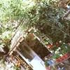 仕事旅行で西荻窪の花屋さん、エルスールへ