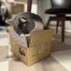 猫をかわいく撮るためにiPhone乗り換え、スマホケースに悩み中