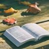 読書初心者におすすめの読みやすくてハズレの少ない作家8人を紹介