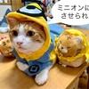 本当の猫の日は8月8日?【世界猫の日】8才を迎えた飼い主の思い