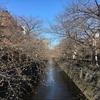 【速報】目黒川の桜 開花状況【2018年3月17日】