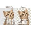 Canva Proの背景透過(とうか)機能の優秀さを語る