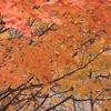飛騨の秋景色 【せせらぎ街道】