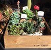 観葉植物、多肉植物 近況
