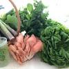 有機野菜のマーケット