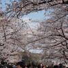 【2017年度版】上野公園の桜と花見グッズまとめ