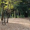 11月下旬:駒沢オリンピック公園周辺をお写んぽ。