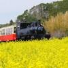 小湊鉄道と菜の花を撮る ①午前編