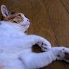猫ちゃんたち、喉を鳴らしてすり寄ってきます。ゴロゴロゴロ・・・