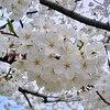 3月28日誕生日の花と花言葉