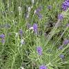 【北海道の家庭菜園】寒かった6月~成長記録2020年6月編🥒