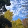上野を満喫しながら冬の気配を感じる