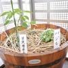【植物ネームプレート】ラミネートで手作りしてみた!