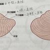 【解剖Ⅰ-8】小脳、中脳、大脳について
