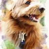 【PORTRA風】Photoshopのフィルターを使って写真を水彩画風に加工する方法。(犬写真)