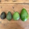 アボカドの季節とワカモレのレシピ