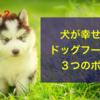 犬に至福のひとときを、ドッグフード選びの3つのポイント