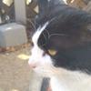 外猫の検査結果