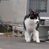 5月14日 谷中から南大塚まで猫さま歩き とその情景