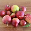 庭の林檎を収穫。
