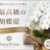 "<p>フラワーギフト通販のTOKYO華創庫&観葉植物通販のGreenjungle(18-1120)<br> <br> <a href=""https://px.a8.net/svt/ejp?a8mat=2ZU4AF+G2Q42+444I+61C2P"" rel=""nofollow"" target=""_blank""><img alt="""" border=""0"" height=""250"" src=""https://www24.a8.net/svt/bgt?aid=181124151027&amp;wid=001&"