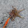 霞埠頭にコウイカを釣りに行ったのだが・・・