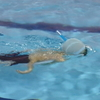 今日の水泳教室で九龍はシュノーケリングのマスク・クリアも出来る。