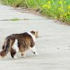 野良猫の衣替え