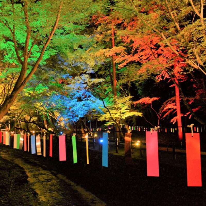 京の七夕2019 〜古都の夏を彩るライトアップへ出かけよう