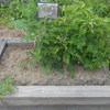 長崎県の植木市