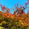 秋の箱根で、微笑む薬師如来と出会う旅