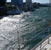 昨夜は南西の風、台風の様、今日は北の強風