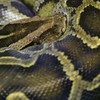 ヘビを飼う時にあれば嬉しい紫外線ライトの種類とその効果!