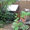 雨の庭と、休日ごはん