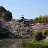 京都の桜の穴場2019、お寺や神社。