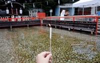 御手洗祭には何度でも行きたい #きょうの京都