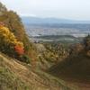 紅葉と ヤマブドウとコクワ