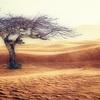午後の健康観察と砂漠と宇宙