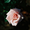 お花って写真の練習にもってこい。
