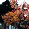源氏物語・秋の描写「紅葉は濃く淡くこきまぜ」俄然面白くなってきた