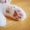 【猫好き必見】猫アレルギーを治すための体質改善・免疫力向上の14の方法