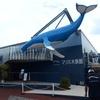 マリホ水族館『生きている水塊』に行ってみた 口コミ・感想